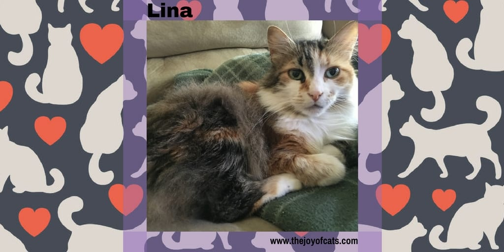 Lina - The Joy of Cats