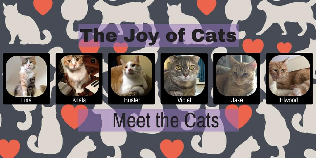 The Joy of Cats - Meet the Cats