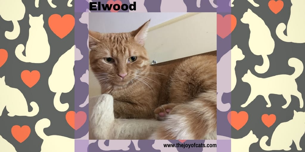 Elwood from The Joy of Cats