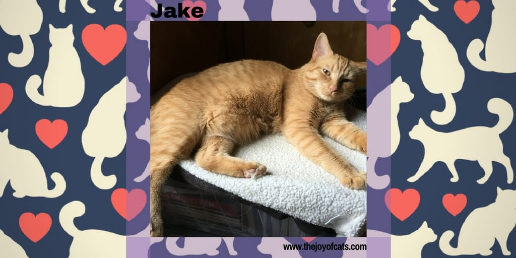 Jake from The Joy of Cats