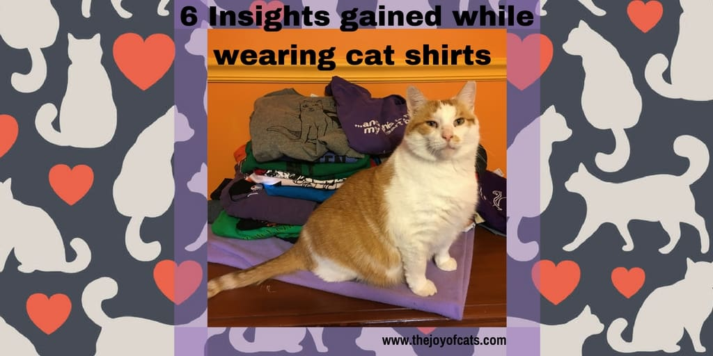 6 Insights gained while wearing cat shirts for 31 days