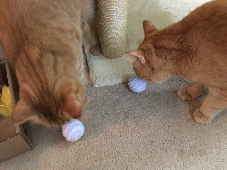 Jake and Elwood with fuzzy ball toys