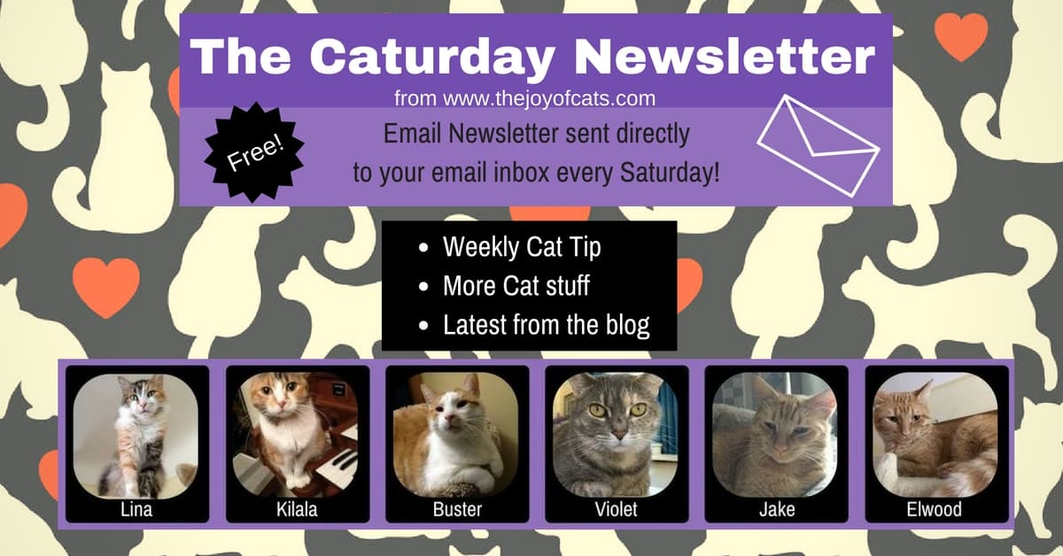 The Caturday Newsletter