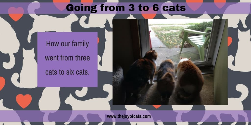 Going from 3 to 6 cats