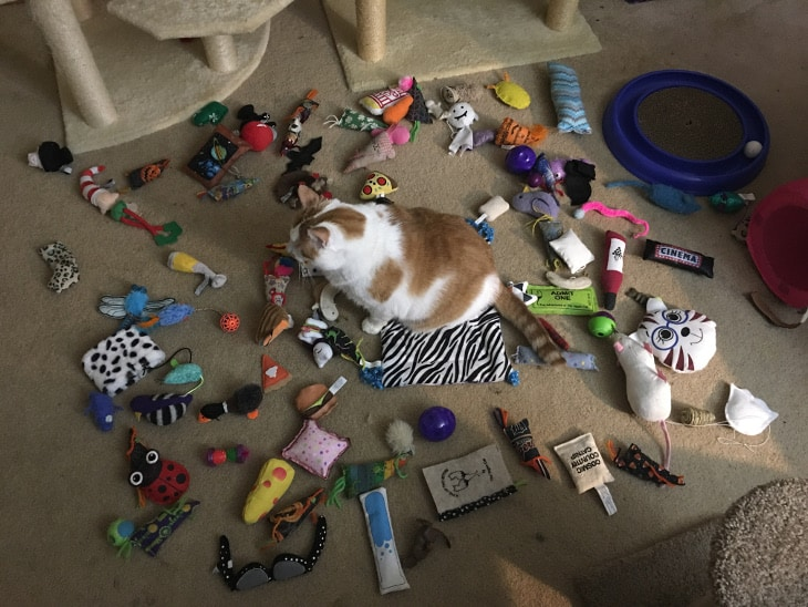 Buster with cat toys. Many, but not all, of these toys were acquired from a cat subscription box