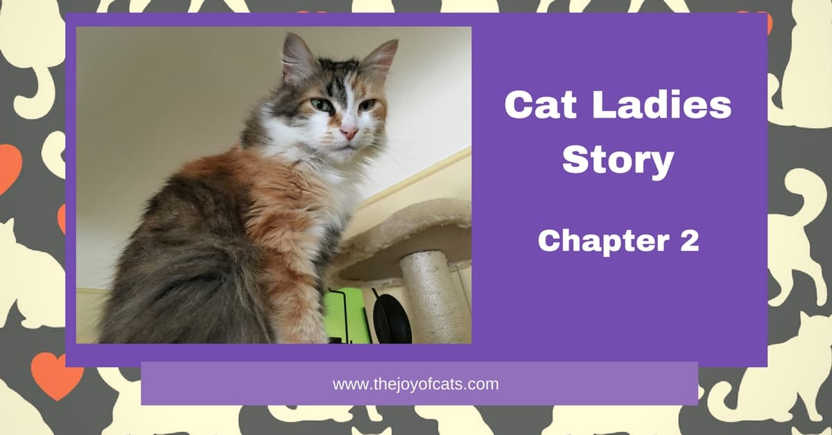 Cat Ladies Story Chapter 2