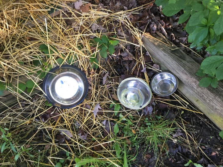 Empty food and water bowls