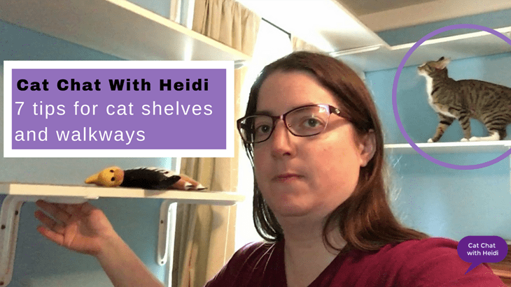7 tips for cat shelves and walkways