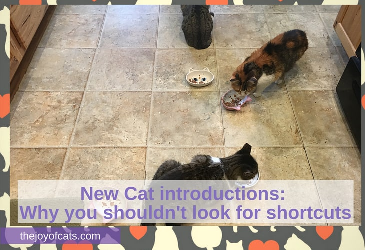 New Cat introductions_ Why you shouldn't look for shortcuts