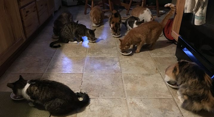 The cats eating in the kitchen