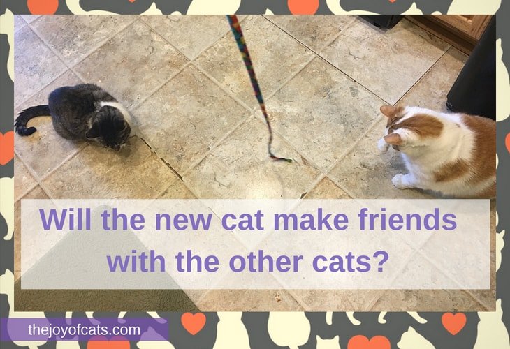 Will the new cat make friends with the other cats