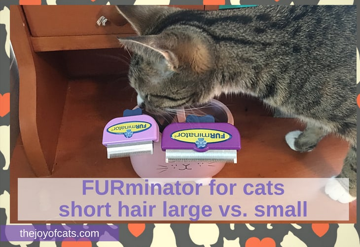 furminator cat short hair large vs. small