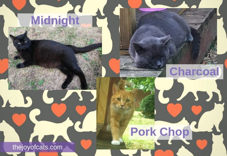 3 Outdoor cats in my yard - Midnight, Charcoal, and Pork Chop