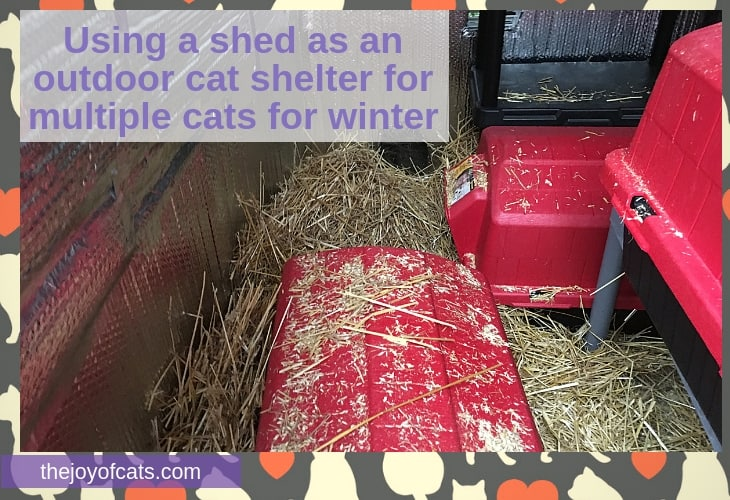 Using a shed as an outdoor cat shelter for multiple cats for winter