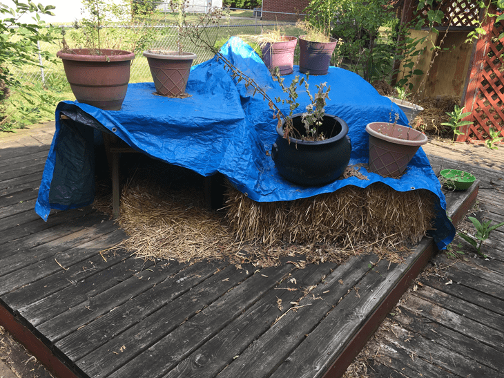 straw fort for outdoor cats