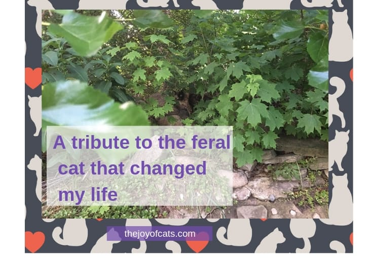 A tribute to the feral cat that changed my life