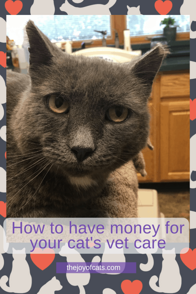 How to have money for your cat's vet care - Pinterest Size Image