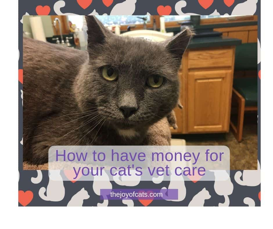 How to have money for your cat's vet care - title picture