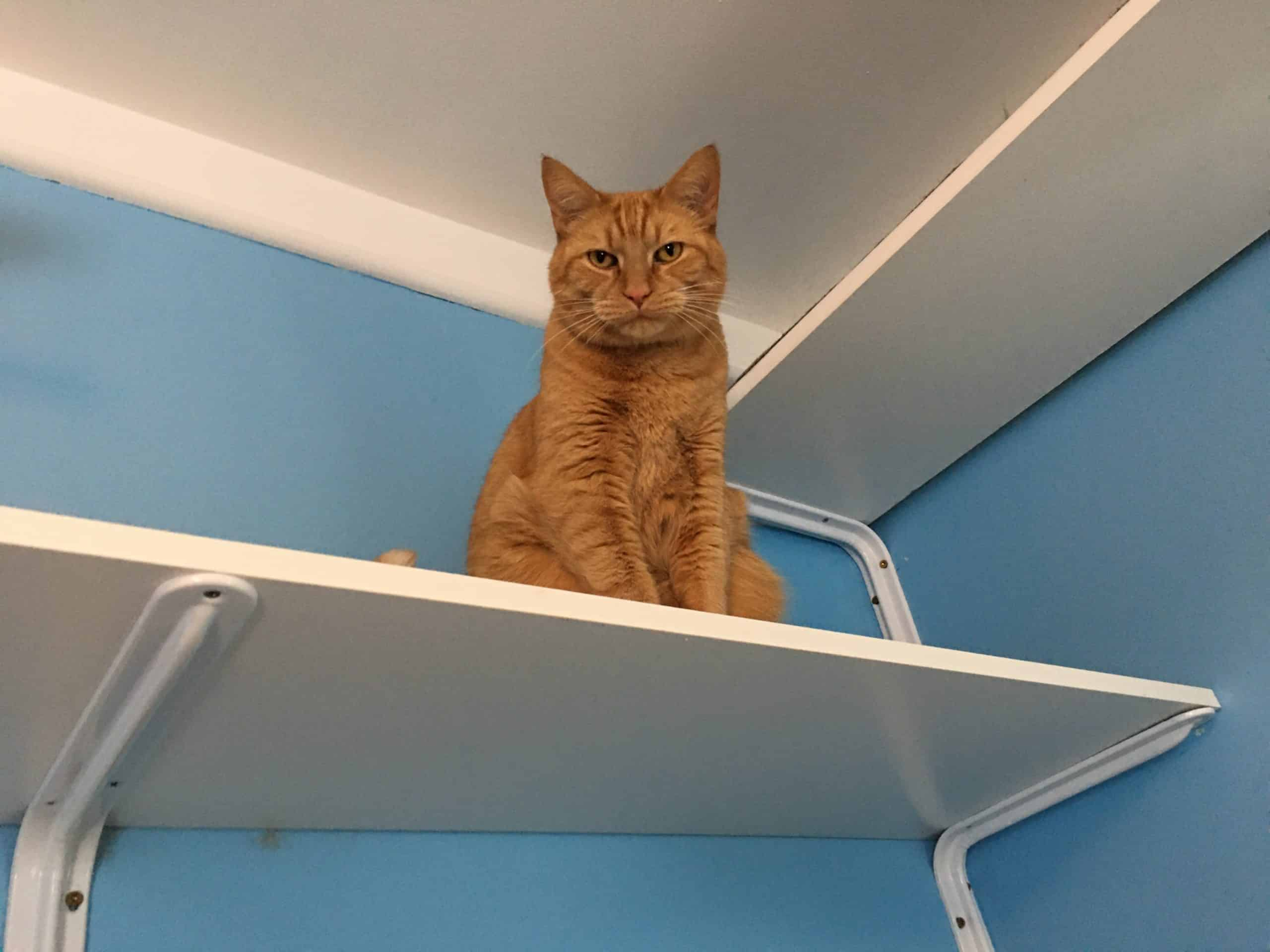 Cat sitting on a cat shelf