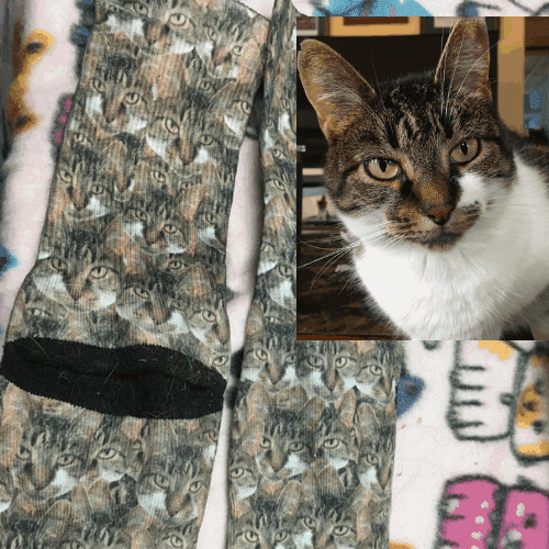 Charlotte's picture next to the cat mash socks