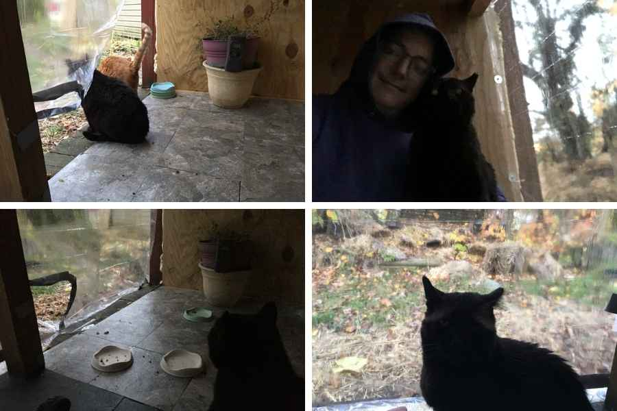 the view from inside the outdoor cat feeding station in four pictures