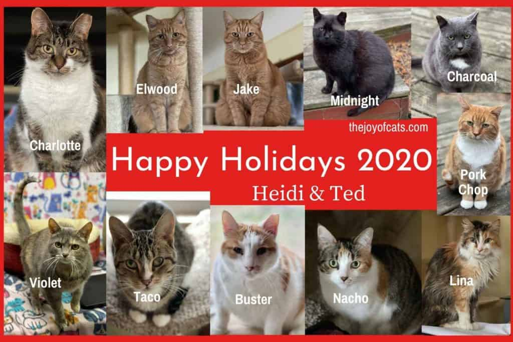 2020 cat photo collage