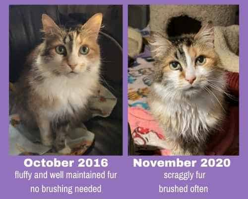 a cat with a before and later picture showing how the cat's grooming declined over time.