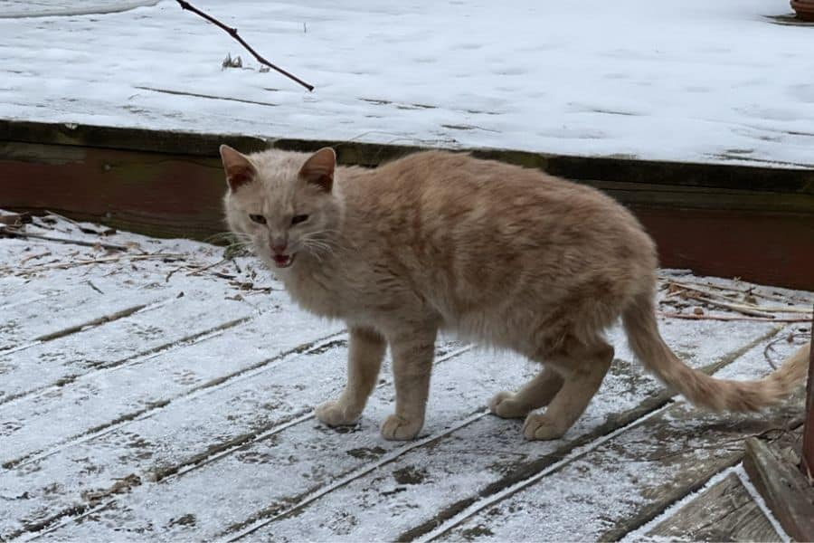 Stray cat on the deck