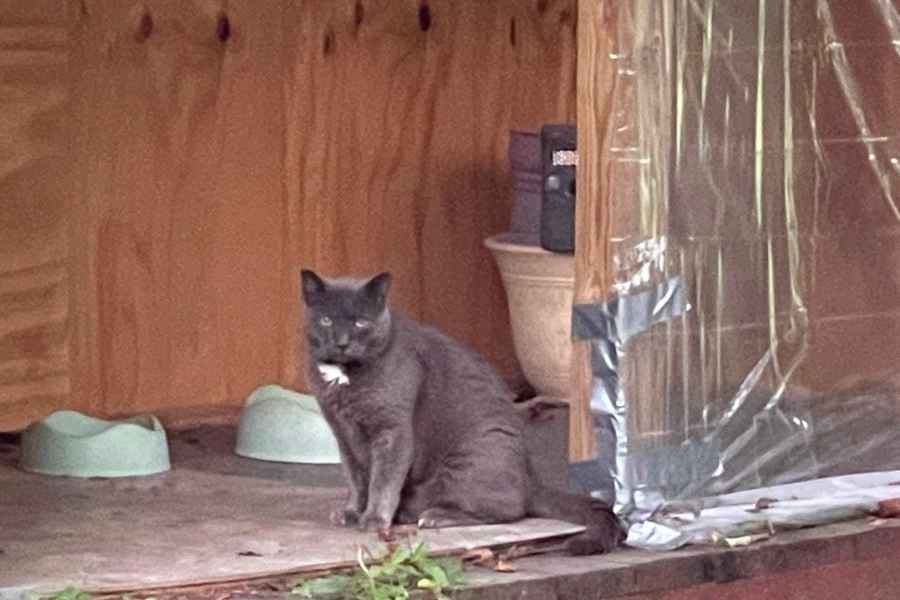 a gray cat sitting by cat food bowls